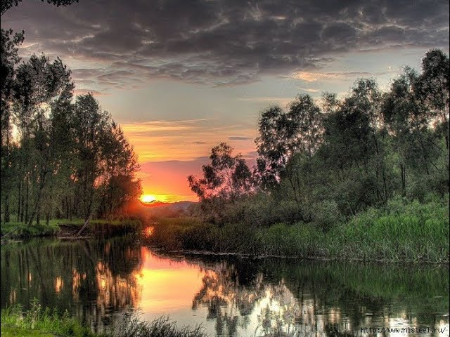 Пение сверчка, журчание воды, цикады и звуки лесных птиц на закате. Антистресс, д ...