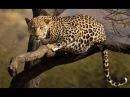 Загадочный мир диких  животных