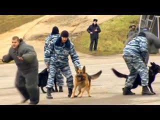 Служебные Собаки в России: Невероятное выступление. видео 2016