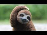 5 фактов о ленивцах