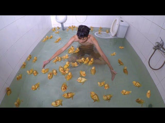 NTN - 4K Bơi Cùng 100 Con Vịt Trong WC ( Pool 100 Ducks )