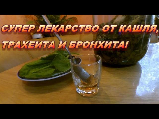 Супер лекарство от кашля трахеита и бронхита Рецепт сиропа подорожника