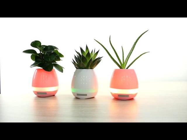 Flowerpots-zks.ru Уникальный музыкальный цветочный горшок