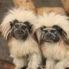Государственный зоологический парк Удмуртии
