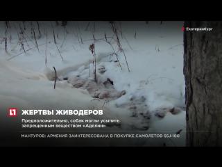 В Екатеринбурге проводят проверку после обнаружения десятков тел собак