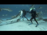 The other side of sharks you hardly see. National Geographic Channel