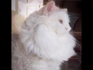 Спасенный котенок Сайлас