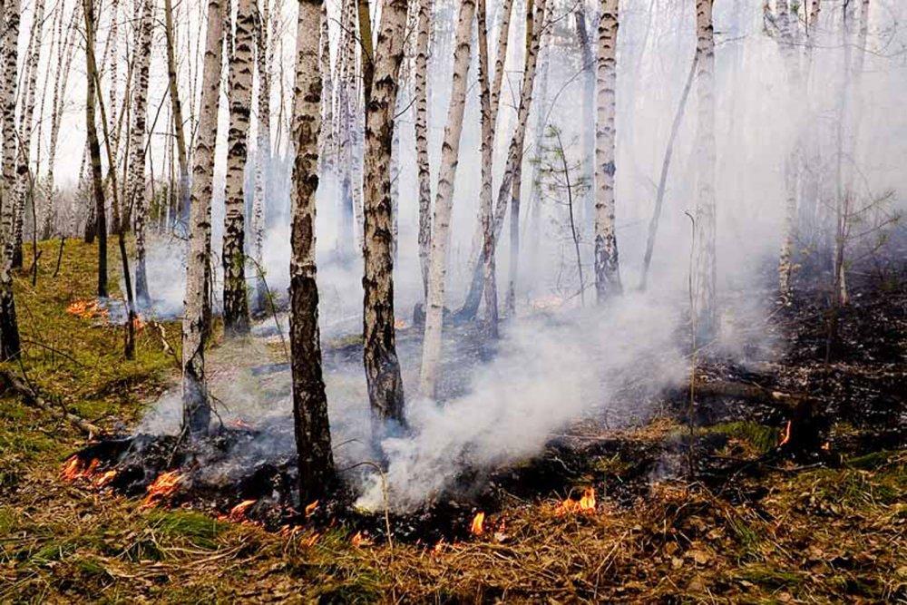 Весенними палами в Томской области выжжено уже около 800 гектаров