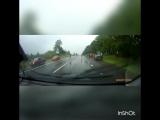 Олени на дорогах