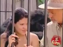 В клетке с гориллой (6 sec)