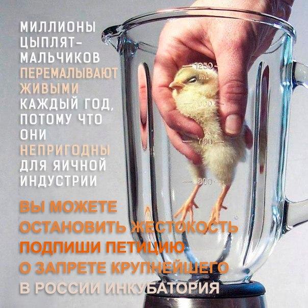 Подпиши петицию о запрете строительства инкубатория у с. Ржавец