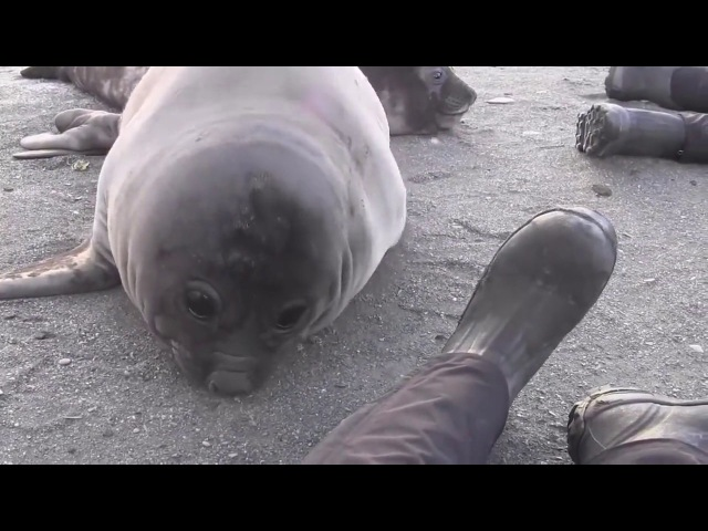 Cute sneezing seal Bless you