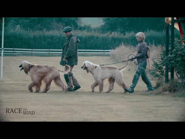 Race The Wind 40 - Greyhound Dog Show (Osnabrück/Germany) • Windhund Galgo Lebrel Levrier 4K