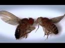 Великие мухи науки Фильм 1 Большой скачок