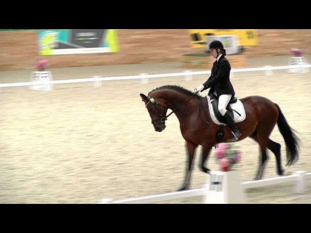 24 09 16 Ярмарка лошадей Иллинойс 2012