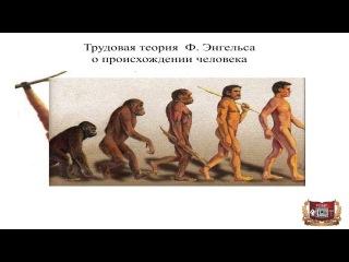 Положение человека в природе