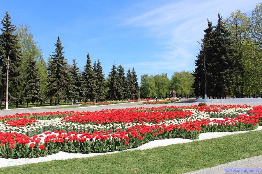 Весенний триумф тюльпанов   11 фото Фото Коломна, Цветы тюльпаны весна
