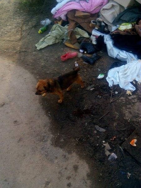 #подписчики  Кто то на помойку собаку мелкую выбросил с ошейником. На