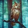 Травинка на ветру • уголок автора фэнтези