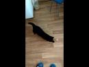 Кот в погоне за солнечным зайчиком