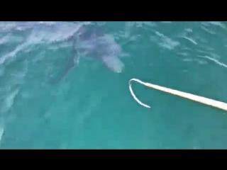Рыбаки сняли и наткнулись акулу, выпрыгивающую из воды