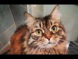 Смешная Кошка Варвара #01  #СеменАлиса