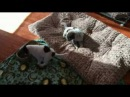 ЛУЧШИЕ ПРИКОЛЫ 2017 Лучшая Подборка Приколы с животными fun with animals in 2017