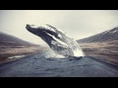 Humpback Whale Photoshop Tutorial Editing