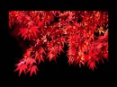 Kyoto Autumn leavesJapan Relaxing Music,Background Music, Piano Instrumental.