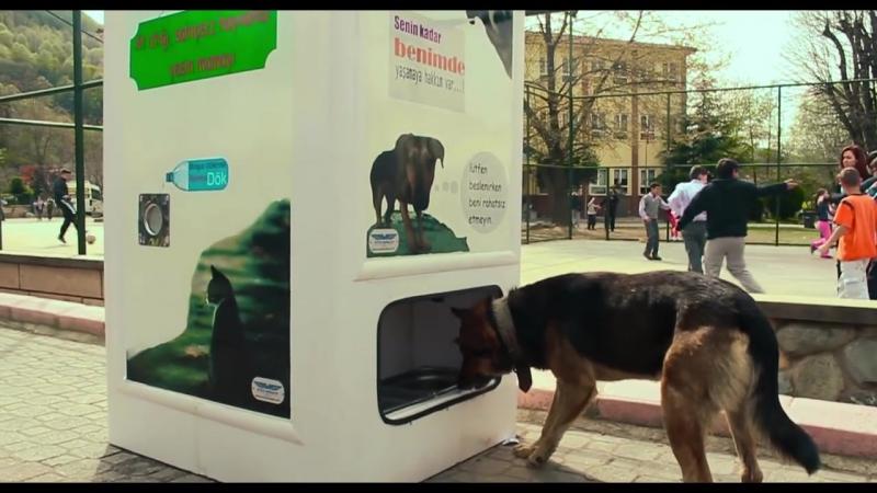 Pugedon-sokak hayvanlarını bedavaya doyuran sistem