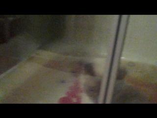 первое купание в жизни котят!erste Bade Kätzchen im Leben.