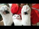 Экстази кот