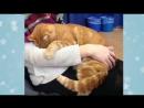 Этот кот каждый день приходит к университету, чтобы пообниматься со студентами