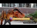 DCTR639 Костюм-T-Rex Костюм костюма динозавров в магазине Mcsdino