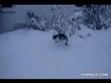 Глубокий снег и кота заставит порхать снежинкой ❄️😸))