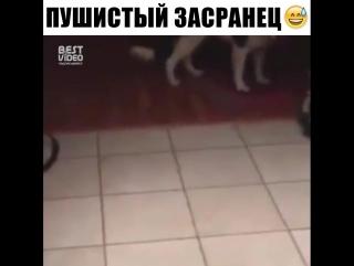Подлый кот
