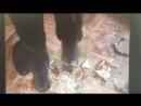 Samantha crab crush with platform boots