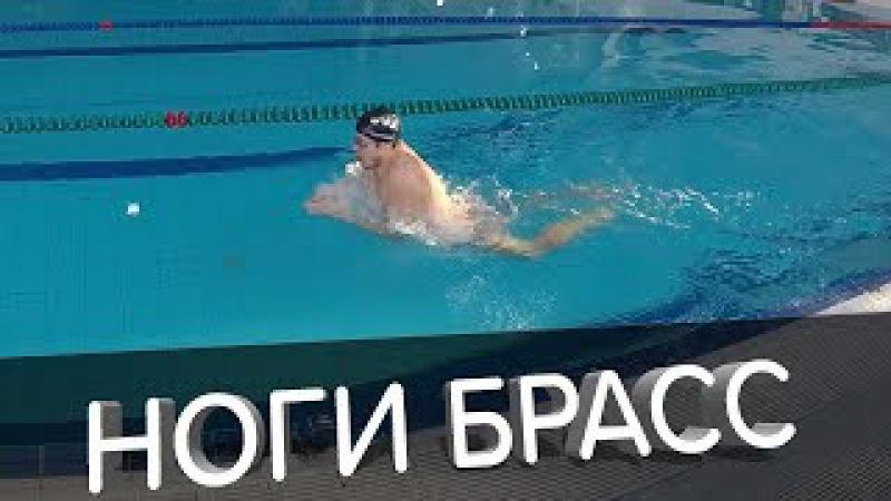 КАК ДЕЛАТЬ ПРАВИЛЬНЫЙ УДАР НОГАМИ БРАССОМ? ЭТО МОЖЕТ КАЖДЫЙ @Swimmate.ru