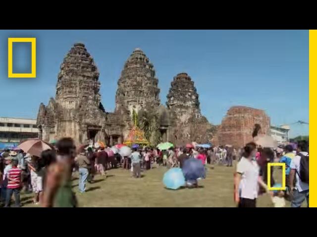 Lopburi Monkey Festival National Geographic Newson's Language Centre