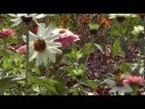 Островок летних цветов.  (Summer flowers island)
