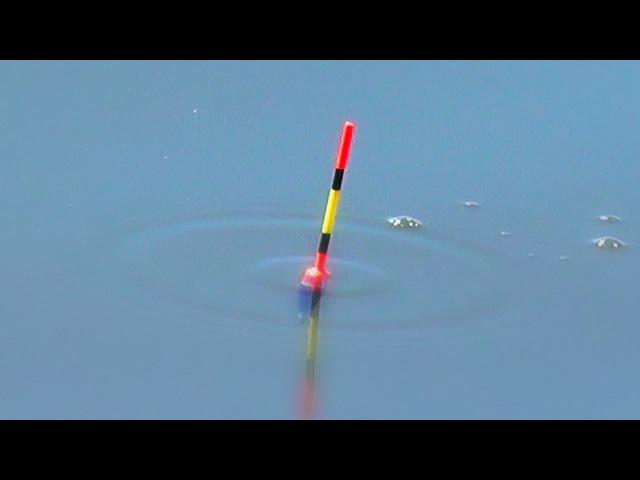 Вудка для початківців, як ловити рибу чайнику
