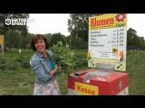 Необычные цветочные поля Германии