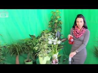 Перекись водорода для цветов_ полив ❀ опрыскивание ❀ обработка почвы