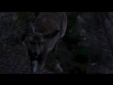 Волк.1994.HDRip.