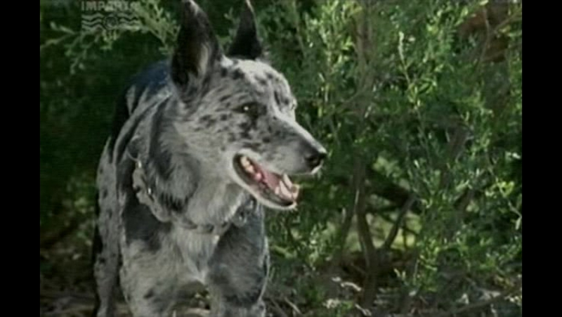 Т/С Собака по имени Снобз 13 серия (2003г)