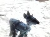 Играет с оленем