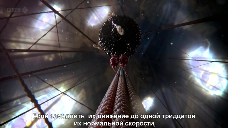 BBC Внутренняя Вселенная Тайная жизнь клетки Our Secret Universe The Hidden Life of the Cell (2012) HDTVRip