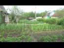 №6 Хронология выращивания томатов в ОГ. 2017г.