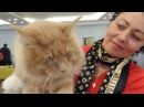 Харьков. Выставка кошек 2017. Часть 2.   Kharkiv. Cat Show 2017 Part 2.