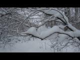 Не большая прогулка по зимнему лесу.